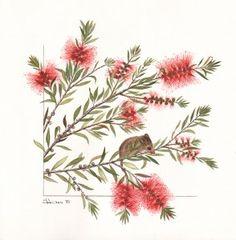 Botanical Art Society of Australia - George Kraus Australian Wildflowers, Australian Native Flowers, Folk Art Flowers, Flower Art, Australian Painting, Wildflower Tattoo, Art Society, Plant Drawing, Watercolor Flowers