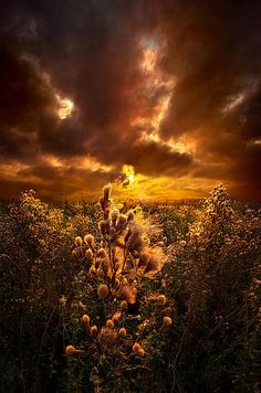 Within Peace And Solitude Print By Phil Koch