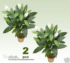 Floral D cor 4959: Two 3 Spathiphyllum Silk Plants Artificial Tree Bush Fake Decor Ps526 -> BUY IT NOW ONLY: $39.99 on eBay!
