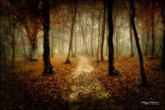 """Deeper"" - broceliande forest - france  philippe MANGUIN photographies,   www.photosdebretagne.com"