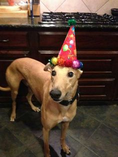 It's almost time to party!!! Join GALT at our 14th Birthday Party for an afternoon of family fun - BBQ, beer, raffles and hounds galore!! See you there!
