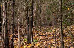 El ciclo de la naturaleza Granada, Trunks, Plants, Stoves, Boiler, Naturaleza, Drift Wood, Grenada, Tree Trunks