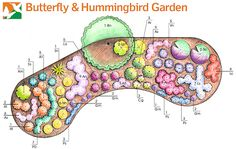 Butterfly Garden Plan Better Homes And Gardens - The One Shrub In The Butterfly Garden Design Is Commonly Called Butterfly Bush For Good Reason It Lures Butterflies Of All Sorts Rocks In This Butterfly Garden Are Convenient Perches F Rosen Beet, Flower Garden Plans, Garden Ideas, Butterfly Weed, Butterflies, Planer Layout, Hummingbird Garden, Dry Creek, Native Plants