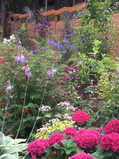 Hydrangea, monkshood, and other plants in slope garden.