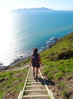 The Stairway to Heaven Hike, Paekakariki to Pukerua Bay - Hiking the Escarpment Track, Wellington, New Zealand Visit New Zealand, New Zealand Travel, Places To Travel, Places To See, Travel Destinations, Stairway To Heaven, Wellington New Zealand, Wellington City, New Zealand Houses