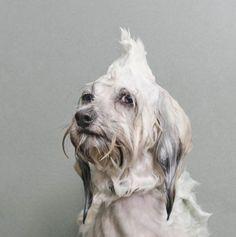 dog after shower