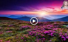 Google+  video reflexión  para que aprendas  apreciar lo que tienes hoy y no cuando ya te estes muriendo