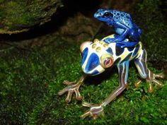 poisonous frogs in nature
