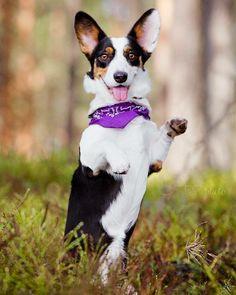 -------- www.dogs-likes.com   ------------------------------------------------- #funnydog pictures, #perros, #typeso dogs, #catsanddogs, #dogtype,#dogbreeds, #kindsofdogs, #funnydogvideos, #mediumsizeddogs, #bestdogbreeds, #dangerousdogs, #whattypeofdogshouldiget, #dog, #dogs, #perros, #mascotas, #pets, #puppy, #puppies, #razasdeperrospequeños