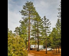 What's hiding here at Idyllwild? Tranquility. - Idyllwild, CA