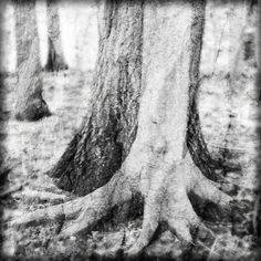 Tree photo black & white magical fairy artistic hug by ImagesByCW