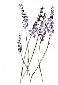 Lavender flowers illustration by Sarah Beetson Pu. Lavender flowers illustration by Sarah Beetson Puzzle piece blooms? Illustration Blume, Botanical Illustration, Watercolor Flowers, Watercolor Art, Tattoo Fleur, Tattoo Painting, Henne Tattoo, Plant Drawing, Lavender Flowers
