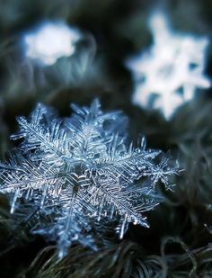 Absolutely incredible macro photography of snowflakes ❄️ We can post your pictures in our account. Snowflake Photography, Macro Photography, Nature Sauvage, Ice Crystals, Winter Beauty, Fire And Ice, Patterns In Nature, Winter Scenes, Winter Snow