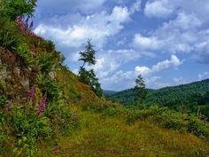 Heinrich Wilhelm: Durch den lichten Wald - Leinwandbild auf Keilrahmen