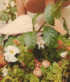 Cogumelos em ferrocimento  E alguns de verdade que nasceram embaixo!  isadorareimao.com