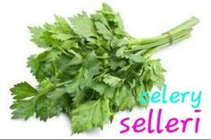 celery (daun seledri/ daun sup) Celery Plant, Small Herb Gardens, Natural Dye Fabric, Different Plants, Seed Packets, Companion Planting, How To Dye Fabric, Growing Plants