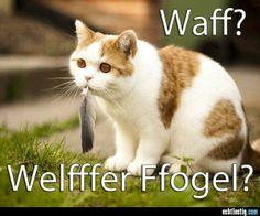 Waff? Welfffer Ffogel?