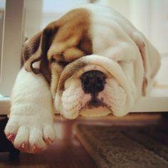 Sooooo cute!