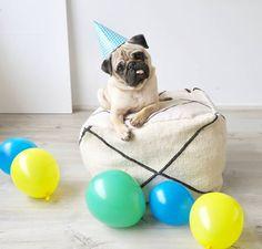 Happy 3rd Birthday to our special four-legged boy! #twogirlsandapug #pug #puglife #pugsofinstagram #pugoftheday #bertjethepug #pugbirthday #cutepugs #cutedogs #dogbirthday #fawnpugs #pugtongue #moroccandecor #moroccanpouf #poufs #neutrals #floorpillow #bohostyle #bohemian #balloons #whitepillow #pugsarethebest #pugheadtilt