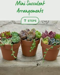 Discover how to Mini Succulent Arrangements in 7 steps Succulent Bowls, Succulent Planter Diy, Succulent Cuttings, Succulent Gardening, Succulent Care, Succulent Arrangements, Container Gardening, Succulent Garden Diy Indoor, Succulent Display