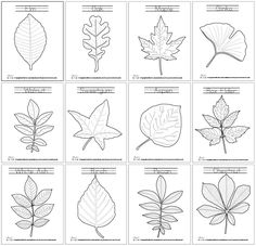 Lets learn about the leaves with the leaf coloring pages!… Lets learn about the leaves with the leaf coloring pages! Lets learn about the leaves with the leaf coloring pages! Leaf Coloring Page, Colouring Pages, Free Coloring, Coloring Pages For Kids, Printable Coloring Pages, Fall Leaves Coloring Pages, Coloring For Kids, Autumn Crafts, Autumn Art