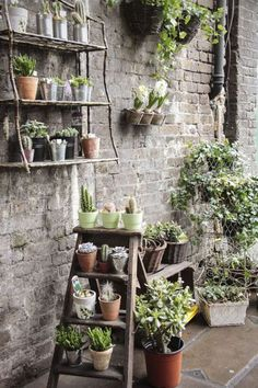 Plant pots can be arranged on the ground, a wall, hanging – even as a centrepiece. Use them to adorn a retaining wall or other area where there's no garden bed.