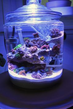 7d70ad5697255 Gena s Creative Reef Container Nano-reef.com