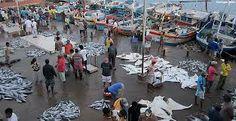 fish trade - Google Search
