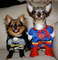 Super pups!