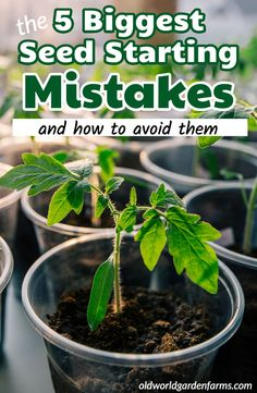 The 5 Biggest Seed Starting Mistakes Made When Starting Seeds Indoors in 2020 (With images) Veg Garden, Fruit Garden, Garden Seeds, Planting Seeds, Lawn And Garden, Vegetable Gardening, Garden Pool, Tropical Garden, Terraced Vegetable Garden