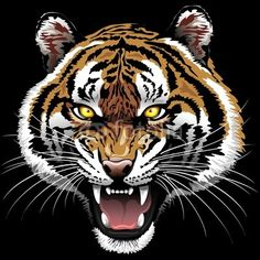 Sold at #Fotolia! :)  The #Tiger #Roar - on #Black #Background © bluedarkat http://it.fotolia.com/id/65070900