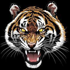 Sold at #Fotolia! :)  The #Tiger #Roar - on #Black #Background © bluedarkat http://it.fotolia.com/id/65070900