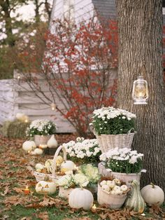 Spooky black-and-orange decorations aren't your thing? Try this pretty alternative: Place white chrysanthemums and ornamental cabbage in cream-colored apple baskets on your front lawn, and surround with white pumpkins and gourds. (Note: For a similar look minus the danger, lanterns and jack-'o-lanterns should always be lit with battery-operated lights, like LED votives.)   - CountryLiving.com