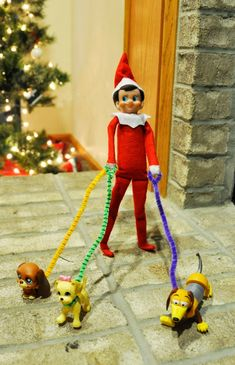 Elf on the Shelf is walking the dogs..elf is helpful #jesusstyle