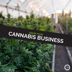 Cannabis businesses still have to be careful about how they market on social media. Read more #cannabismarketing tips here: https://www.eminentseo.com/blog/grow-business-cannabis-marketing-tips/ #dispensary #cannabismarketing #cannabis