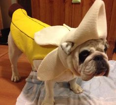 Happy Halloween   BaggyBulldogs