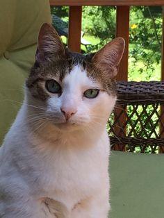 AJ Cat | Pawshake