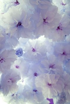 I used to have these in my garden <3 so pretty
