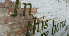 DIY: Mos graffiti   Tuinieren met Bakker