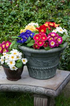 Containers of multi colored primroses on stone bench against hill of myrtle by Georgianna Lane Shade Flowers, Spring Flowers, Beautiful Flowers, Small Gardens, Outdoor Gardens, Home Grown Vegetables, Primroses, Garden Boxes, Garden Ideas