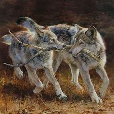 There's someone in the wolf Wildlife Paintings, Wildlife Art, Animal Paintings, Wolf Photos, Wolf Pictures, Bruder Tattoo, Wolf Love, Wild Wolf, Beautiful Wolves