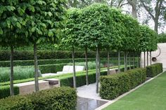 Pleached avenue with hedges