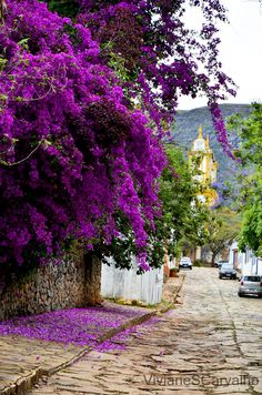 A mystical shade of purple flowers on a beautiful flower can completely change the look and appeal of your home, garden, bouquet, wallpaper and even wedding decoration. tall purple flowers names - dark purple Purple Flower Names, Types Of Purple Flowers, Bougainvillea, Flowers Perennials, Planting Flowers, Beautiful Images, Beautiful Flowers, Simply Beautiful, Purple Flowering Plants