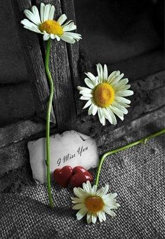 I miss you. Simple Flowers, My Flower, Flower Power, Beautiful Flowers, I Miss My Daughter, Miss Mom, Daisy Hill, Sunflowers And Daisies, Daisy Flowers