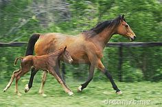 Mother horse