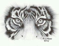 Tiger Eyes 2014