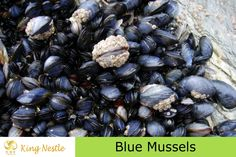 Plastic Found In Mussels From Arctic to China – Enters Human Food Rubbish In The Ocean, Baked Mussels, Frozen Tilapia, Frozen Seafood, Blue Mussel, Cooking Mussels, Dolphins Animal, Fish Farming, Easter Traditions