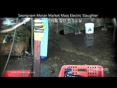 Seongnam, South Korea: Close Down Moran Market Dog Slaughterhouses-Enforce The Animal Protection Law!