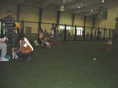 Fake grass over gravel= way to get rid of gross. Indoor Dog Park, Indoor Activities, Basketball Court, Fake Grass, United States, Dogs, Parks, Dallas
