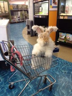 I want this bunny!!